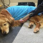 Napping while getting laser therapy
