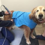 Cider getting laser therapy